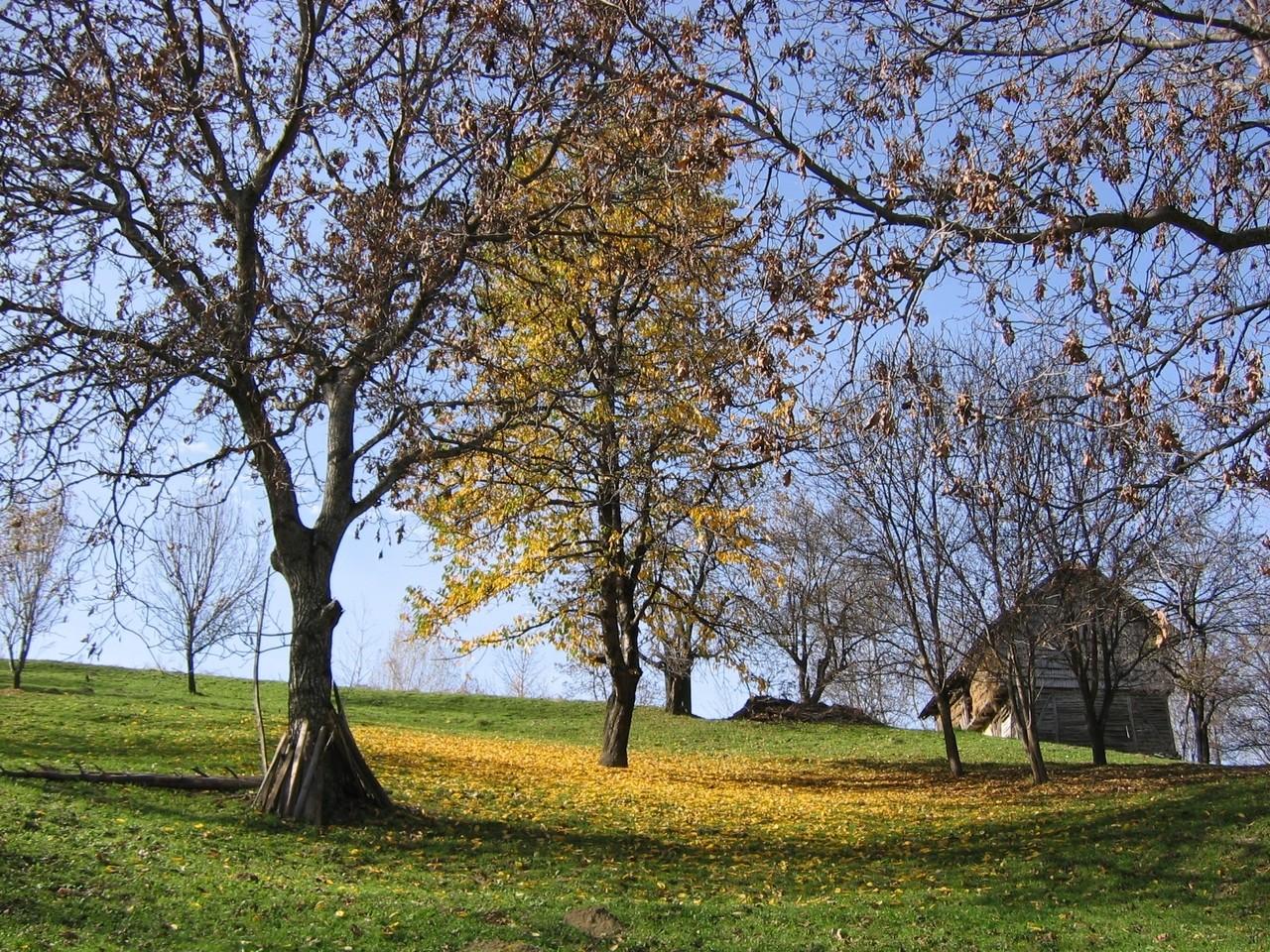 Park Mużakowski – wybitna sztuka ogrodowa